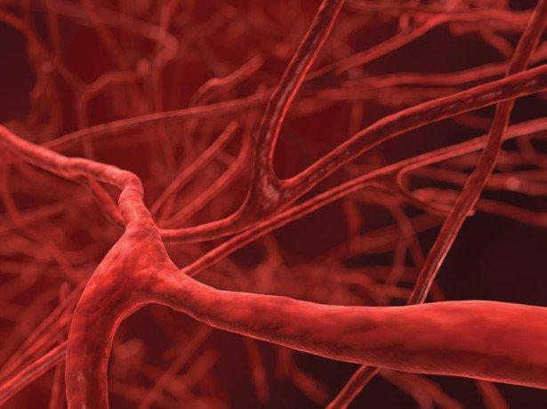 Чорноплідна горобина-лікувальні властивості тиск і головний біль