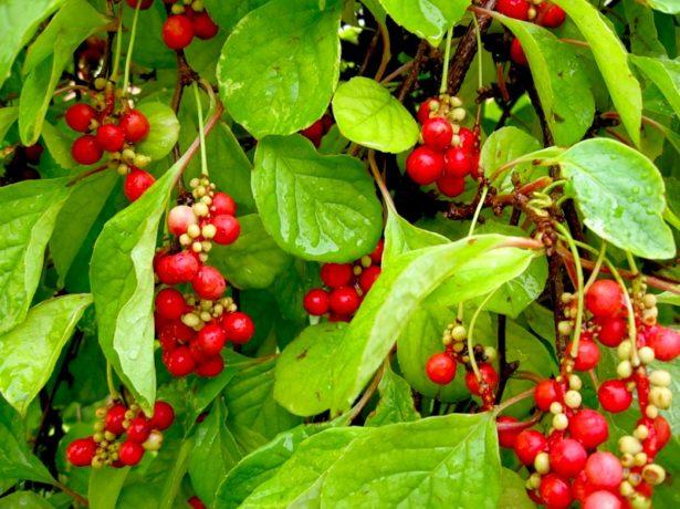 Чим удобрювати сад восени