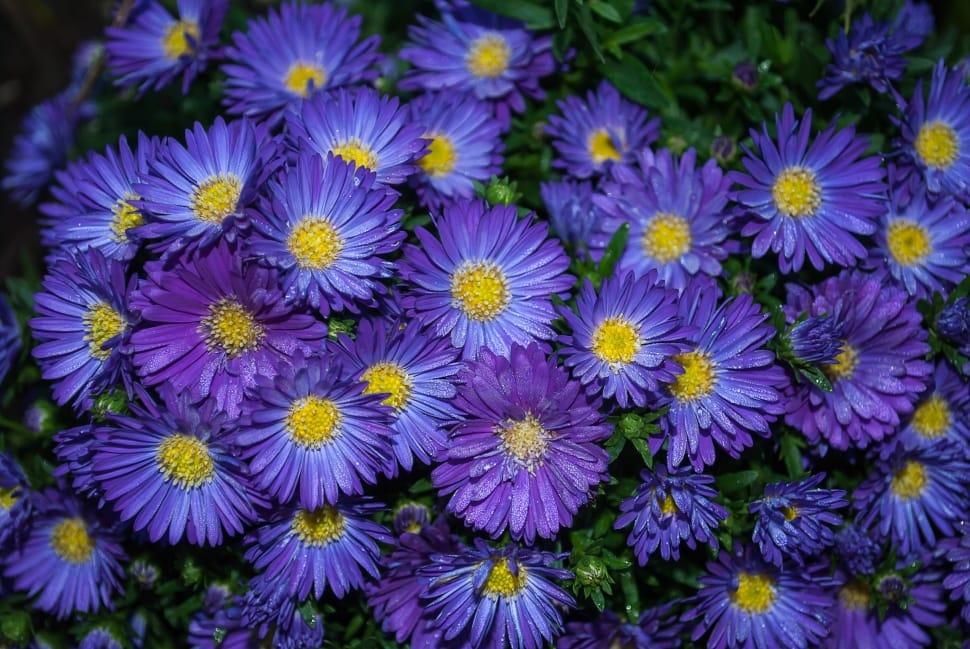9 кольорів, які будуть прикрашати ваш сад до самих заморозків