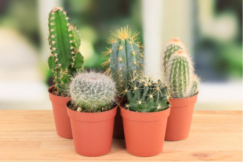 Квіти для сімейного щастя: 8 кращих кімнатних рослин для будинку по фен-шуй