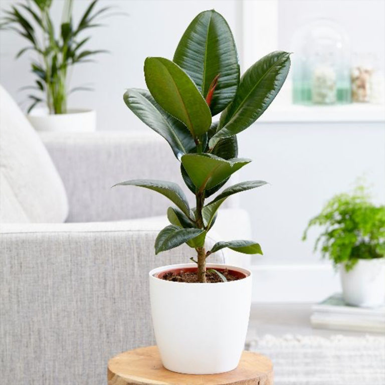5 рослин, які краще за інших очищають повітря в будинку