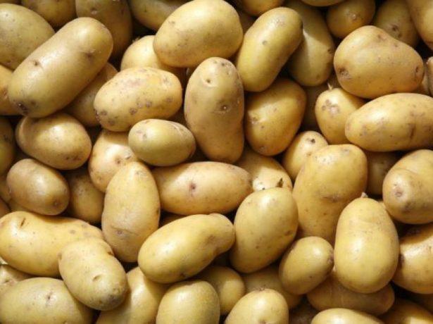 Кращі сорти картоплі для вирощування в середніх широтах