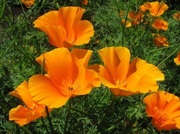 Липень-саме час садити квіти