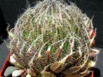 Хавортія: все про вирощування екзотичного сукулента