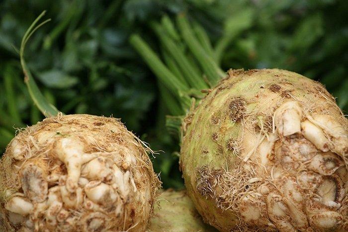 Зберігання селери взимку: кореневого, черешкового і листового