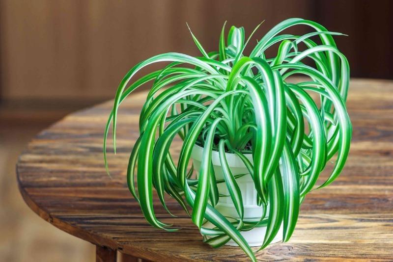 5 кращих рослин для дитячої кімнати: безпека і краса