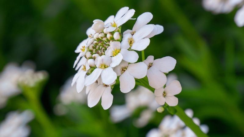 9 красивих однорічних квітів для бордюрів