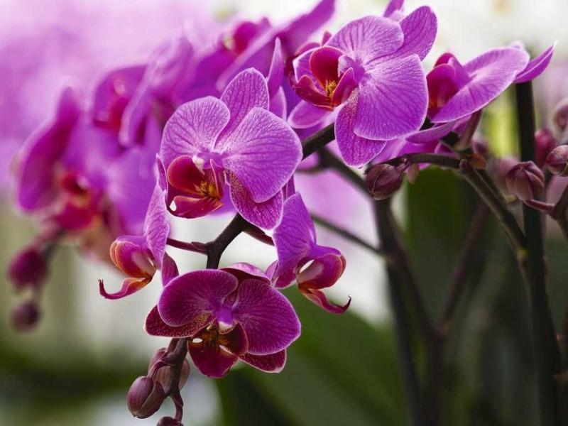 Що можуть розповісти про господиню її улюблені кімнатні квіти
