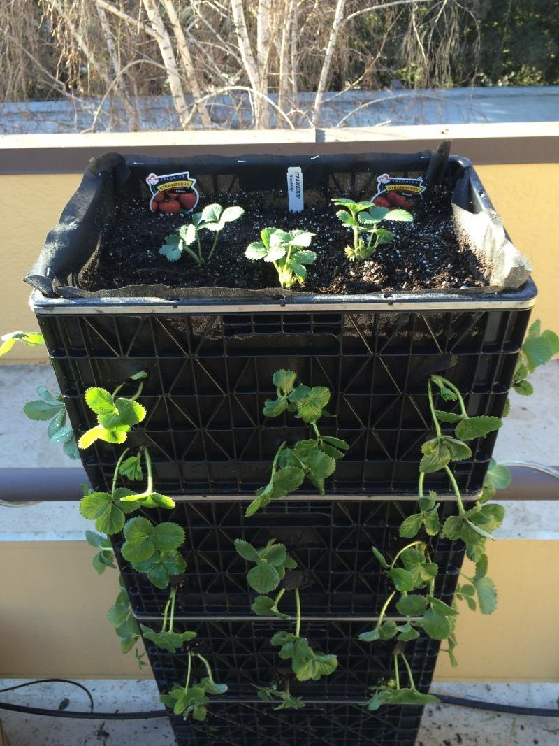 6 ідей, як задіяти пластикові ящики на дачі або в саду