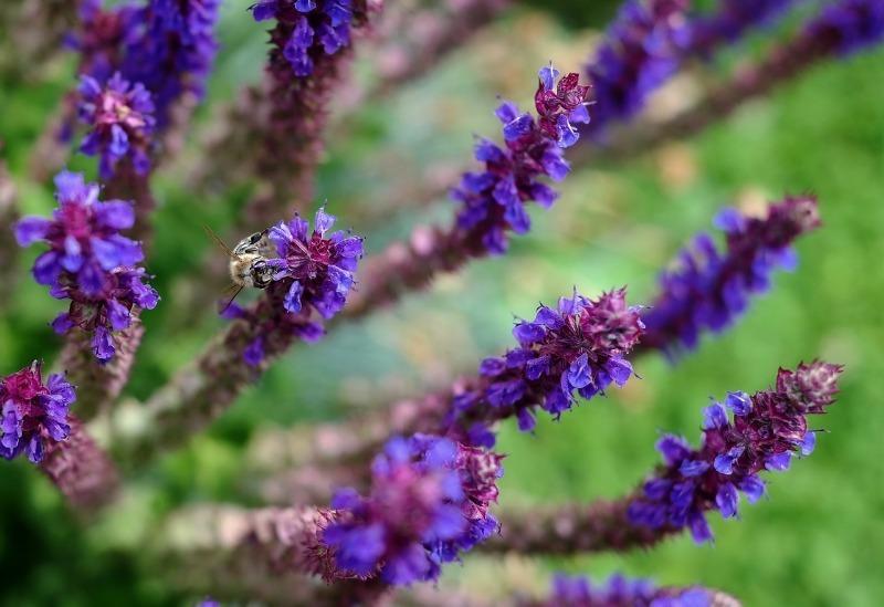 9 рослин, які захистять вас від навали комарів на дачі