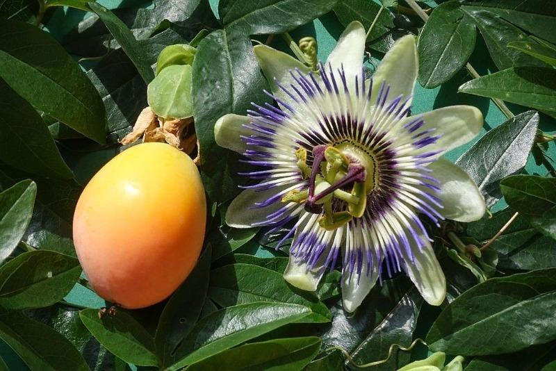 Які екзотичні фрукти можна виростити з кісточки прямо вдома