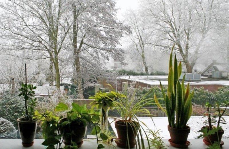 Як підготувати домашні рослини до зими: 8 корисних порад