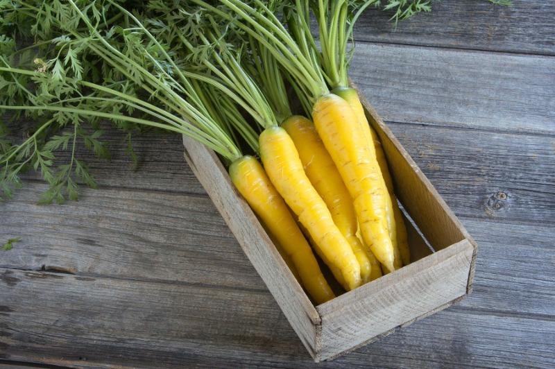 7 врожайних сортів моркви