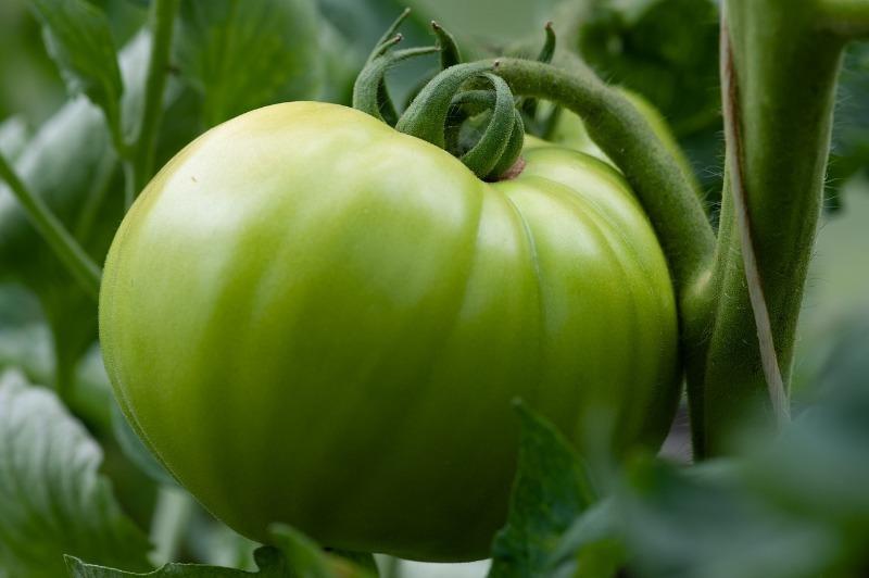 5 простих способів дозаривания томатів будинку