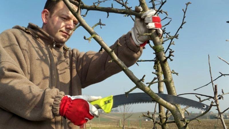 8 найчастіших помилок початківців садівників
