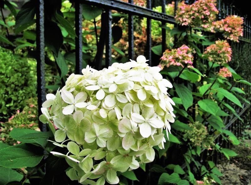 5 витривалих рослин для вертикального озеленення