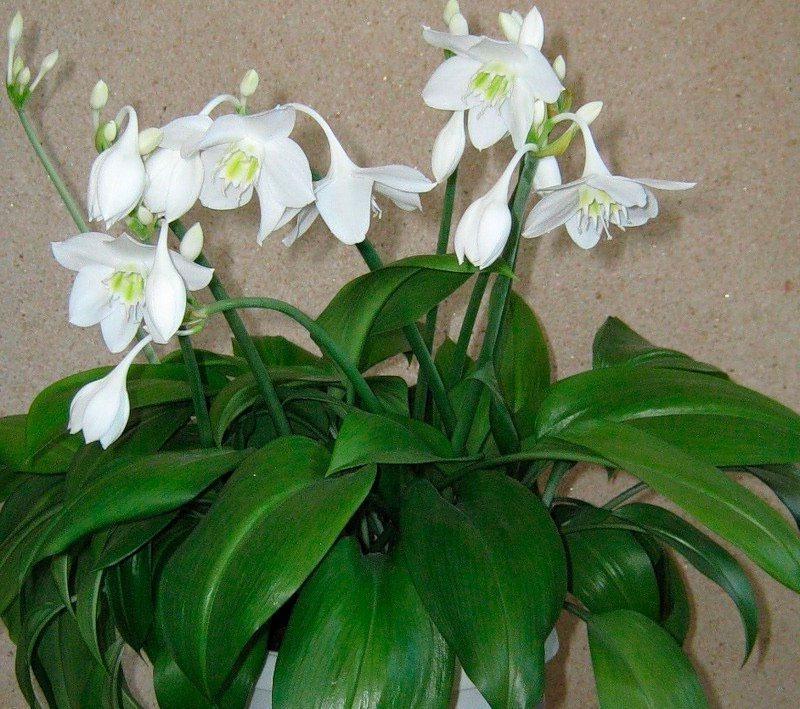 5 кімнатних рослин, які порадують вас найприємнішим і стійким ароматом