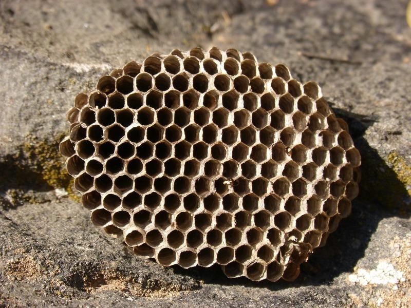 Від бджоли до шершня: чим небезпечний укус, як надати першу допомогу