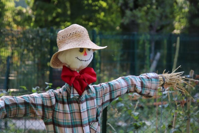 Як захистити свій урожай від птахів