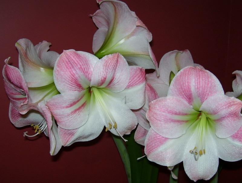 11 квітів, які легко виростити навіть у склянці води