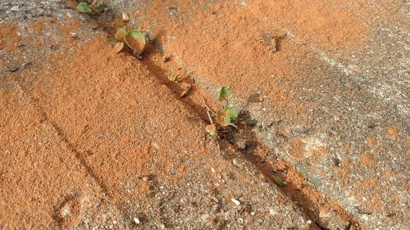 Боротьба з мурахами: як позбутися від комах без застосування хімії