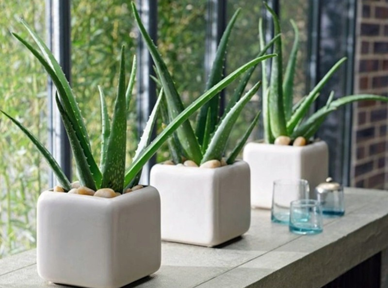11 рослин, які допоможуть прикрасити кожну кімнату вашого будинку, навіть ванну