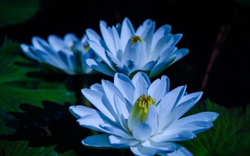10 рослин на дачі, за які вам загрожує штраф або кримінальна відповідальність