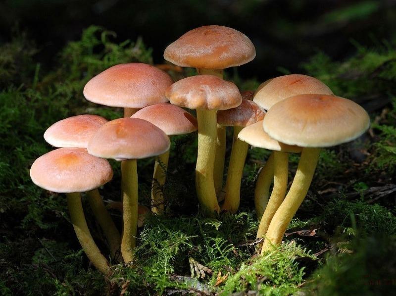 5 помилок недосвідченого грибника, які небезпечні для життя