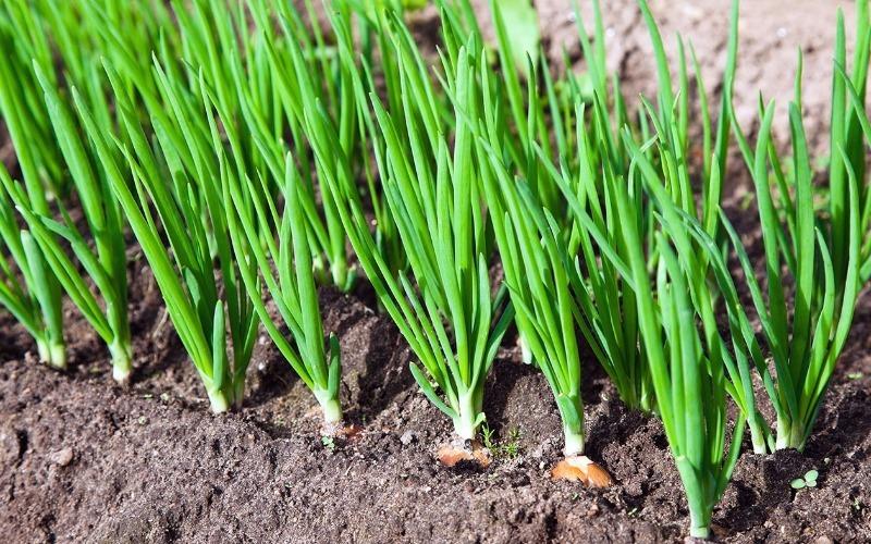 Що потрібно садити в квітні на зростаючу місяць, щоб отримати багатий урожай