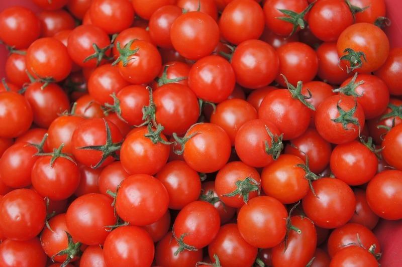 Чому насіння проростає прямо всередині томатів