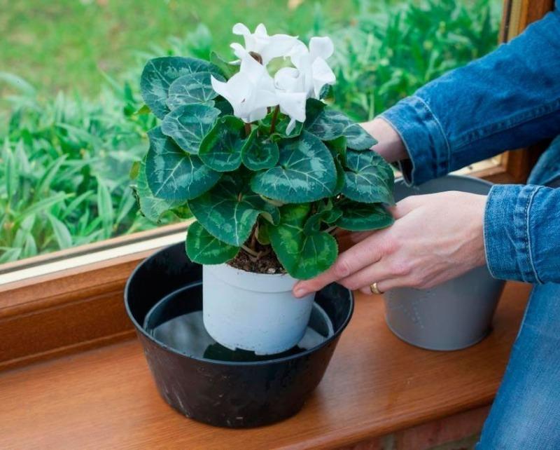 7 варіантів автополиву для квітів без вашої участі