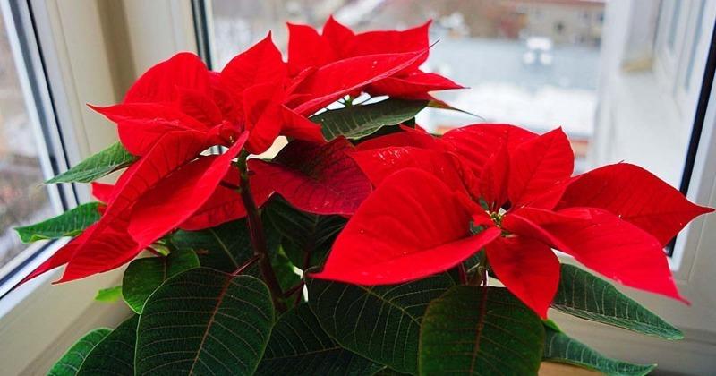 9 домашніх рослин, які можуть запросто нашкодити вашому вихованцеві