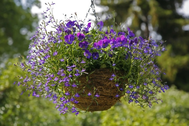 Лютневий посів: 7 однорічних квітів, які варто посадити