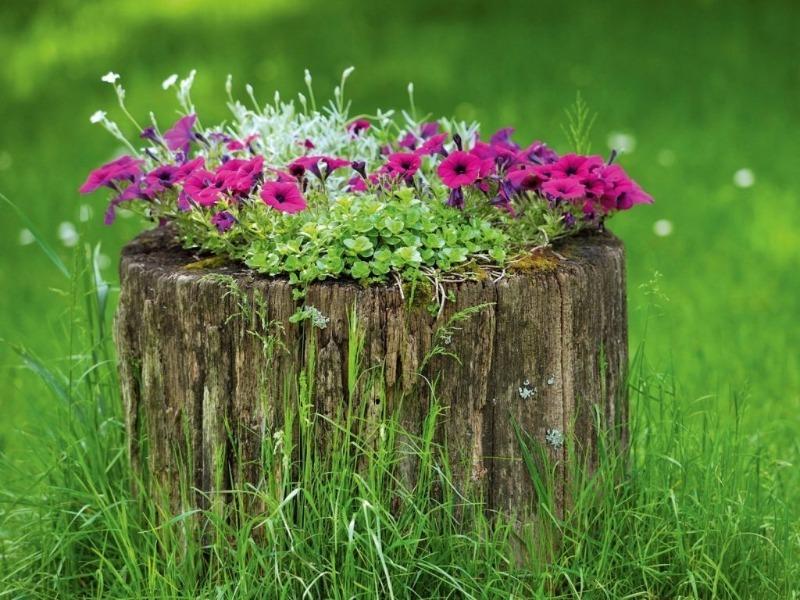 8 способів зробити красиву клумбу з того, що збиралися викинути