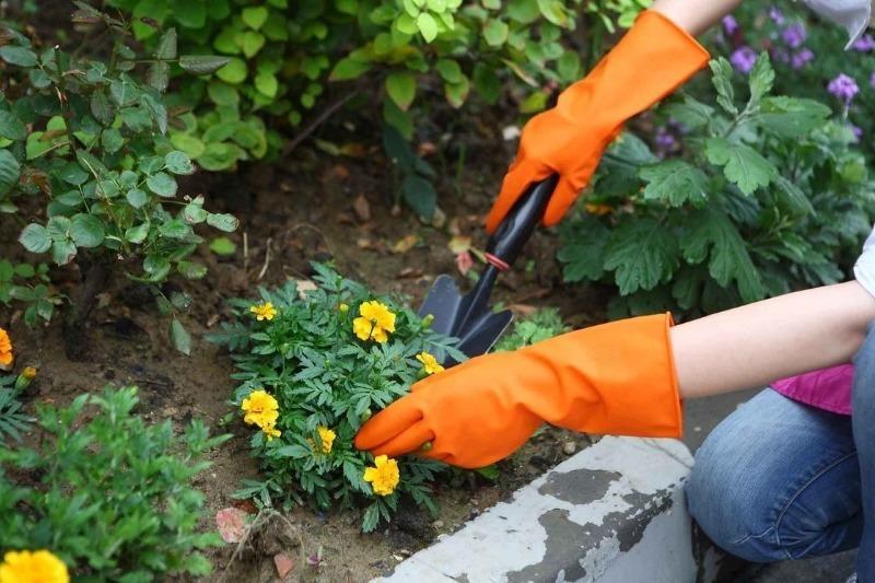 5 небезпечних речей, які не варто купувати в магазинах для саду