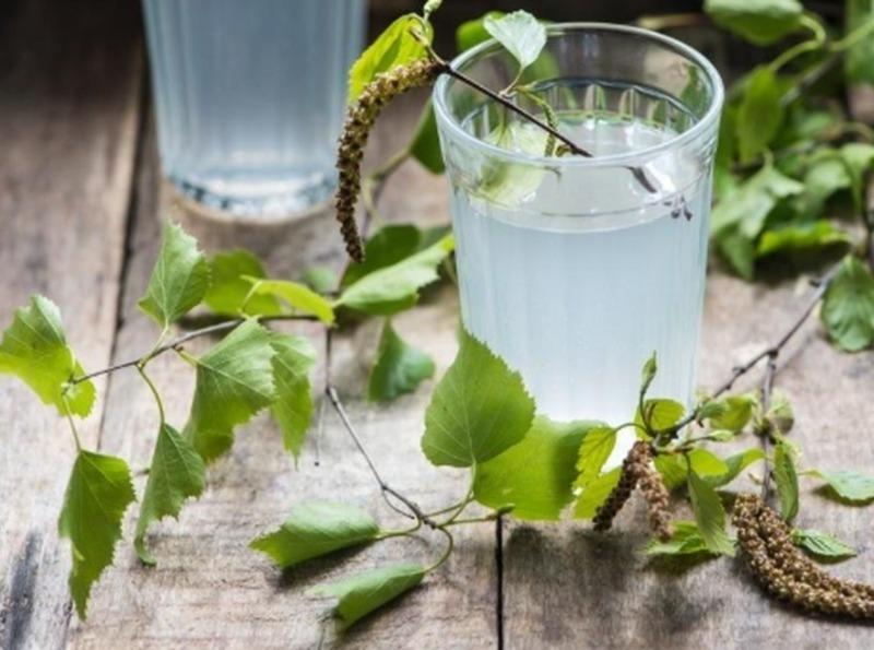 5 хмільних напоїв, які можна приготувати з березового соку
