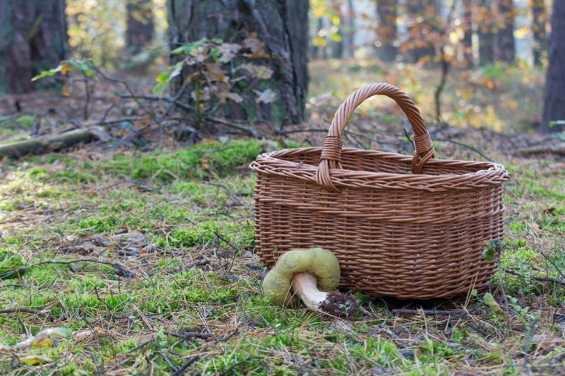 Чому тільки росіяни їдять гриби з лісу, а за кордоном з цим складно