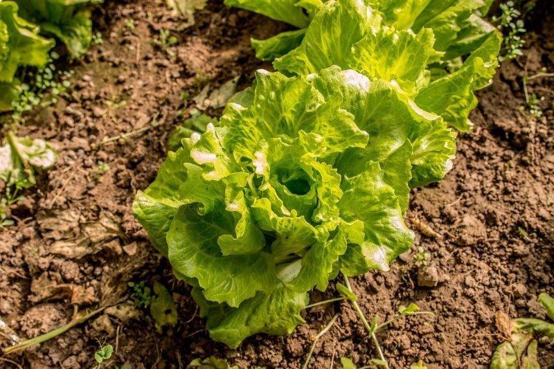 9 холодостійких городніх рослин, які можна сміливо садити раніше інших