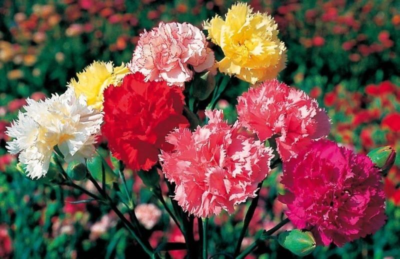 9 кольорів, які висівають в останній місяць зими