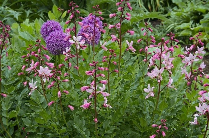 9 рослин на дачі, від яких варто триматися подалі