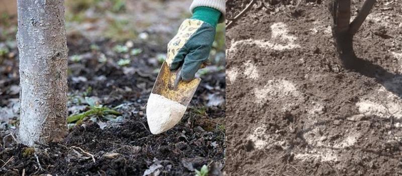 Не тільки розкислення грунту: 6 способів застосування доломітового борошна на дачі