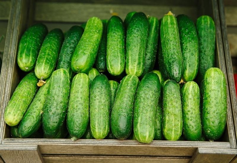 5 врожайних і невибагливих гібридів огірків серії сибірська для посадки в 2020 році