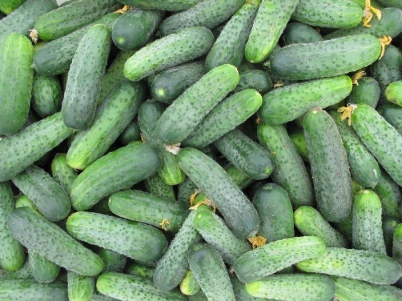 7 суперпучкових огірків, які відрізняються диво-урожаєм і неймовірним смаком