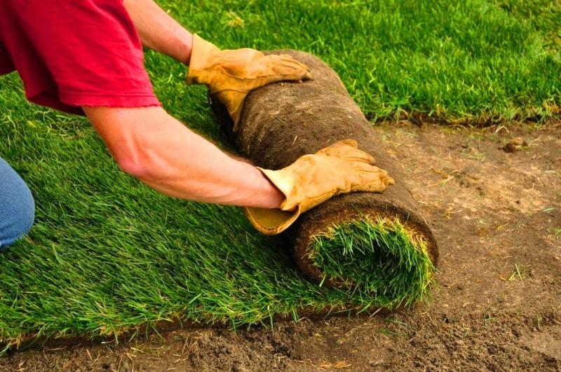 5 переваг і 4 недоліки рулонного газону