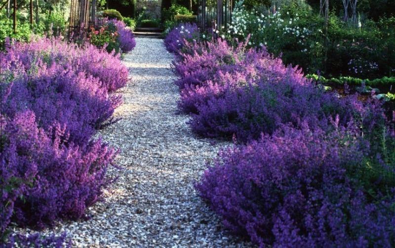 9 прекрасних ідей для саду, за яким не потрібно багато догляду