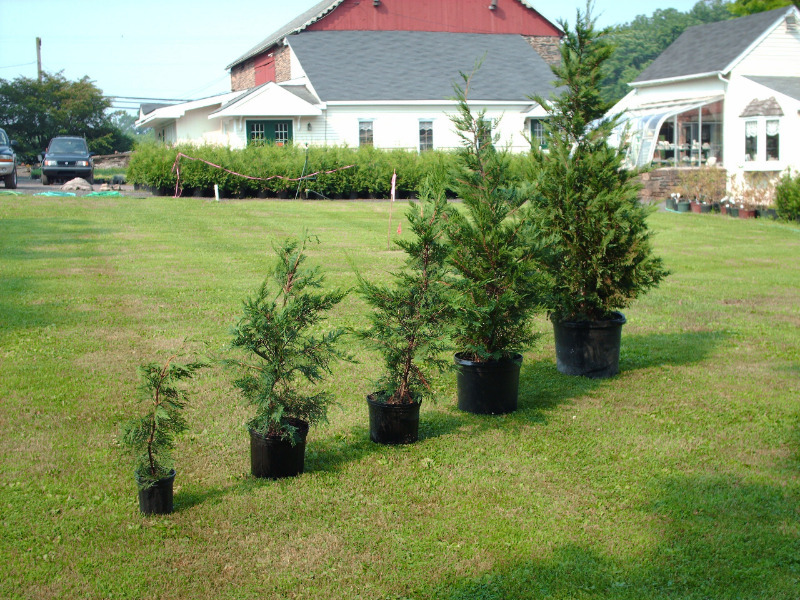 4 ніжних рослини, які погано переносять зимівлю і потребують хорошого укриття