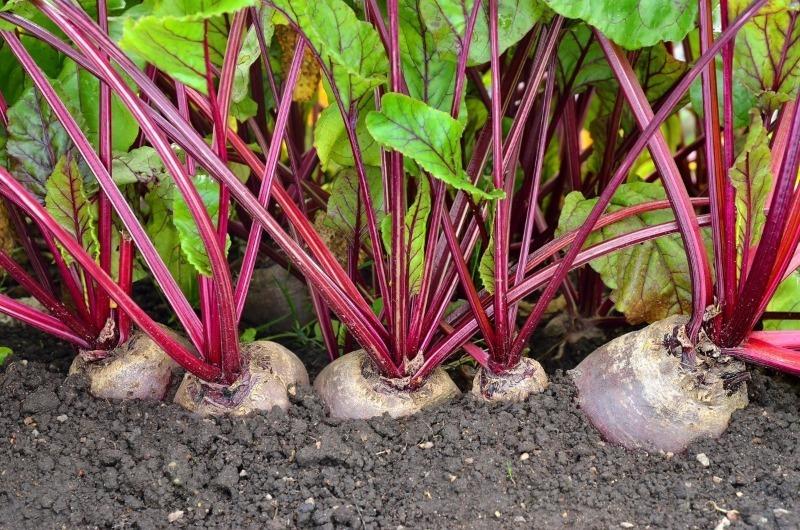 10 городніх культур, які дадуть багатий урожай навіть в тіні