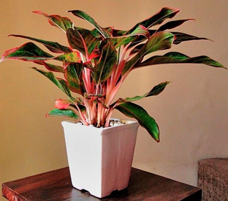 Які кімнатні рослини підходять кожному знаку зодіаку