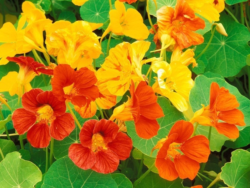 7 кольорів, які неймовірно швидко сходять і зацвітають