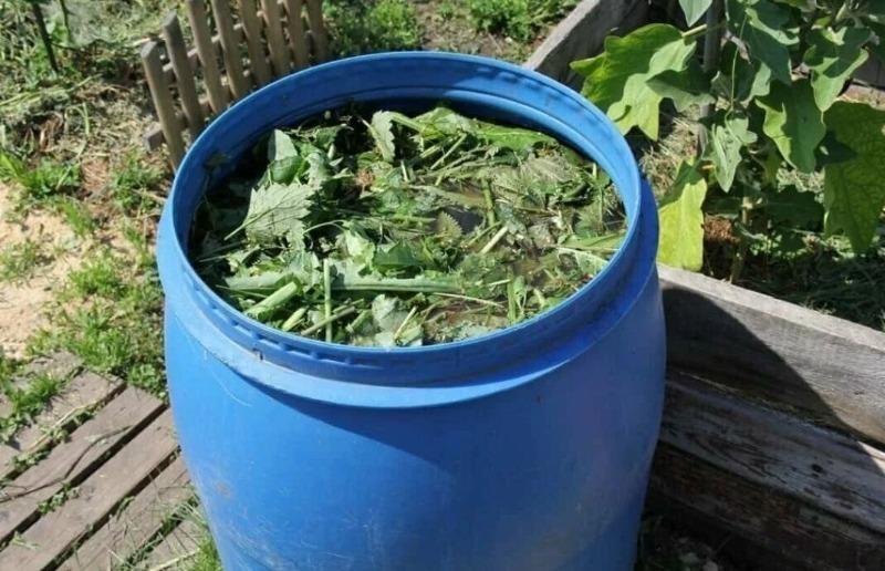 3 підгодівлі для великих і мясистих томатів, які повністю замінять хімічні добрива